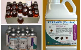 Tetrix remedy for bedbugs