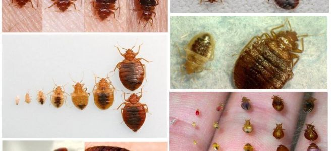 Protection from bedbugs at home