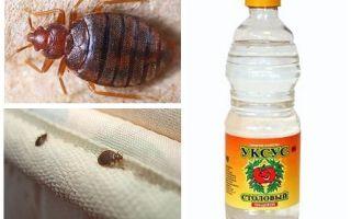 Vinegar against bedbugs in the apartment