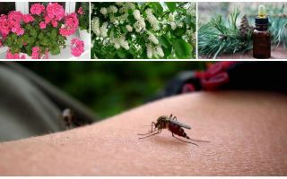 How to deal with mosquitoes in an apartment or house