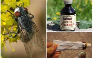 Remedy for gadflies and horseflies for humans