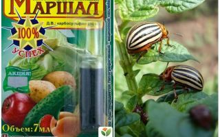 Means Marshal from the Colorado potato beetle