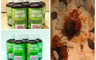 Cypermethrin from bedbugs