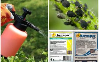 Means Aktara against aphids