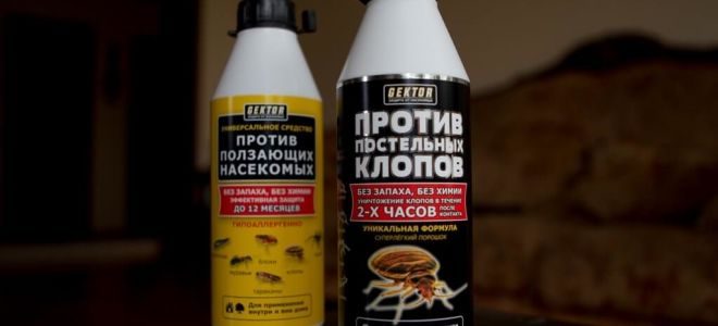 GEKTOR against bed bugs and crawling insects