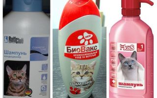 Flea shampoos for kittens and cats