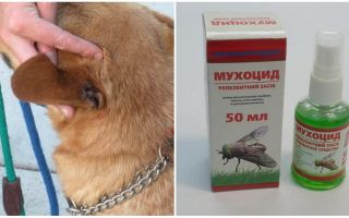 How and what to treat the ears of a dog from flies