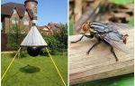 Homemade traps for gadflies and gadflies