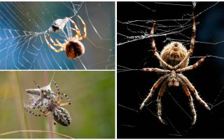 As the spider weaves a web