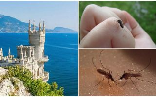 Are there mosquitoes in the Crimea