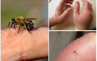 What is useful bee sting for a person?