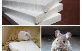 Do mice gnaw foam