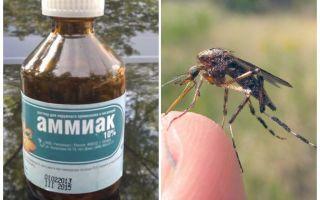Liquid ammonia from mosquitoes