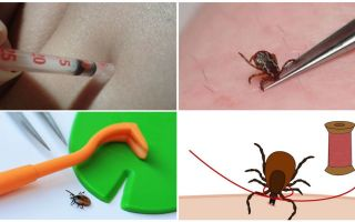 Is it possible to crush a tick with your fingers