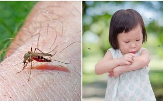How many days does the mosquito bite go?