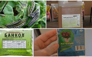 How to get rid of caterpillars on the cabbage folk remedies
