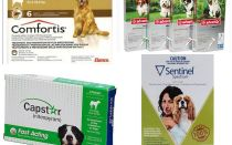 How to get rid of fleas in dogs, the most effective means of fleas