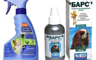 The best flea spray for dogs