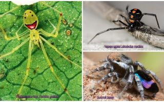 The most beautiful spiders in the world