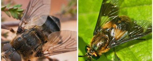 The difference between gadfly and blind