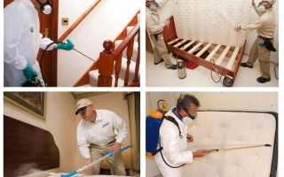 Destruction of bedbugs in the apartment with a guarantee
