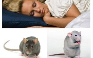 Dream Rodents