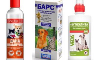 The most popular and effective flea shampoo for dogs