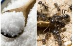 Salt against ants in the garden