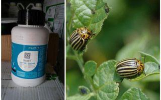 Remedy for the Colorado potato beetle Boreas