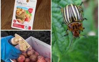 When and what to spray and process potatoes from the Colorado potato beetle
