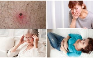 What ticks are dangerous to humans and what