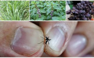 What plants repel mosquitoes: grass, trees and flowers