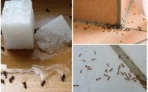 How to get rid of ants in a private house folk remedies