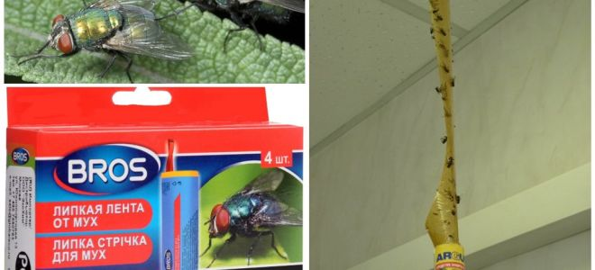 Shop and folk remedies for flies