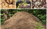 The life of ants in an anthill