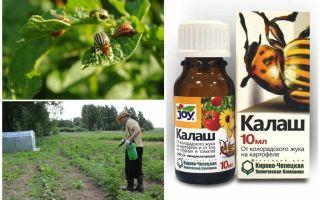 Means Kalash from the Colorado potato beetle