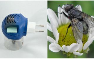 Fumigators from flies and mosquitoes in the outlet
