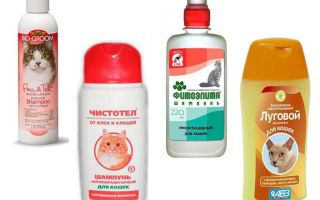 The best flea shampoos