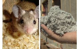 What kind of insulation do not eat mice