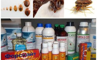 Poison for bedbugs at home