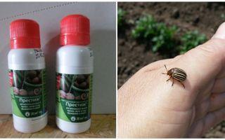 Tool Prestige from the Colorado potato beetle