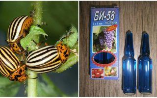 Means Bi 58 against the Colorado potato beetle