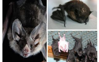 How to get rid of bats in the house