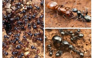 Stages of ant development