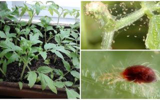 Methods of dealing with spider mites on seedlings