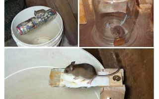 How to make a mousetrap with your own hands