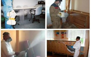 Hot mist treatment for bedbugs