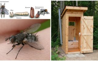 How to get rid of flies in the toilet on the street