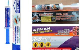 Cockroach Syringe