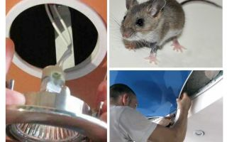 How to get rid of mice in the stretch ceiling